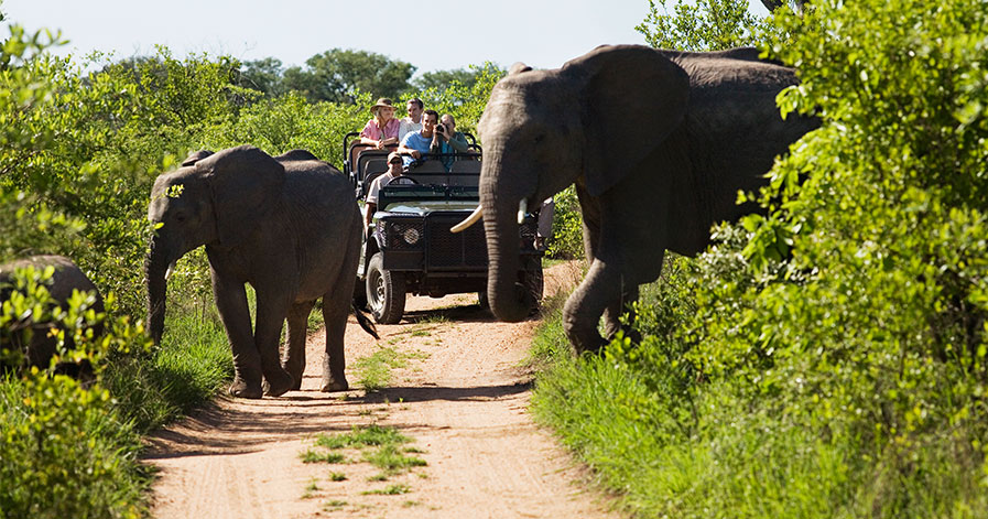 Elephants passing in front of safari truck