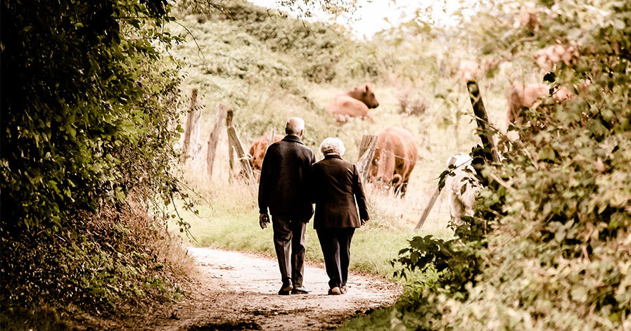 Old couple walking on path with cows in background