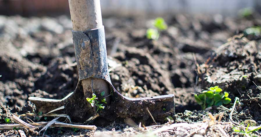 A shovel placed in the ground in a garden