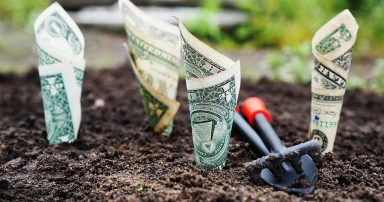 Bills planted in ground with spade