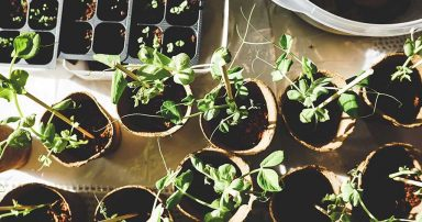 Small potted plants on a table